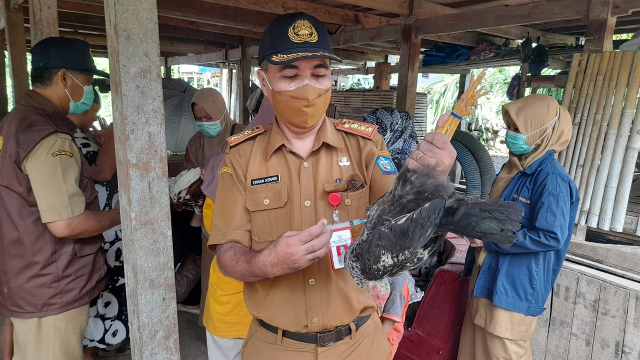 DPKHP Soppeng Lakukan Vaksinasi massal Ayam Buras