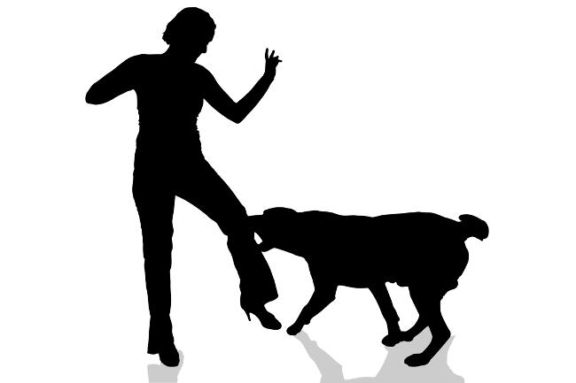 Antisipasi Covid,Petugas Jaga Perbatasan Di Soppeng Digigit Anjing Gila